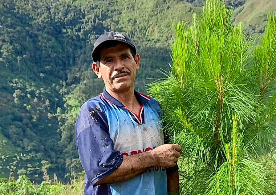 Back in 2019, Aurelio Herrera Estela took the decision to plant both a hectare of coffee in an agroforestry system and half a hectare of forest. We took this picture last week, two years after plantation in front of one of his strong trees. Aurelio is a proud producer from the Jumarp Cooperative.